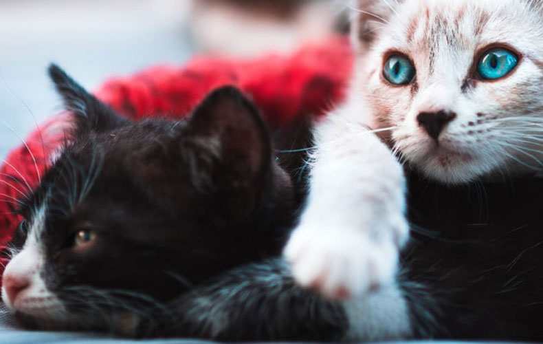 Two Cats Comfortable in Bed