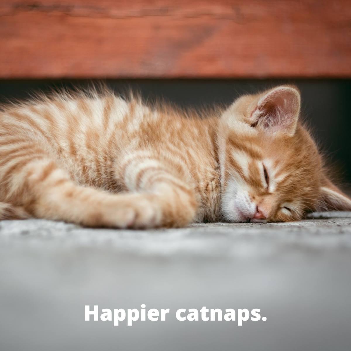 Happier Catnaps