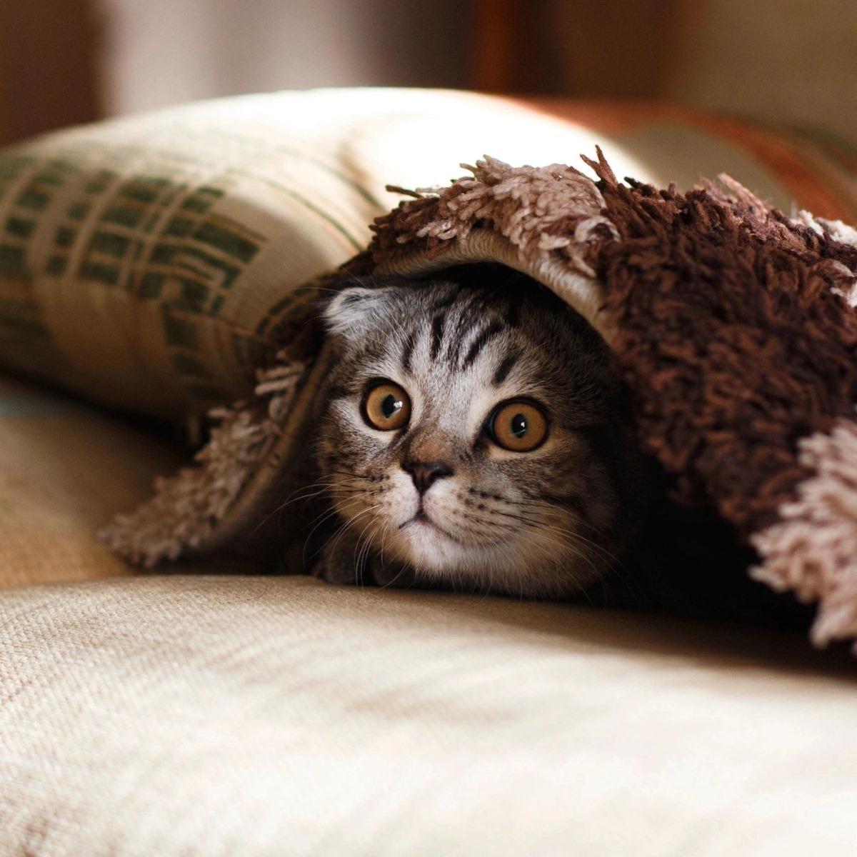 Cat Peek Using Blanket