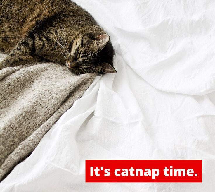 It's Catnap Time